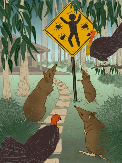 illustration tick brush turkey australia