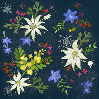surface pattern design Australian natives, flannel flower, wattle.